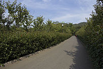 青岛中山公园的路上