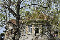 青岛的房子景色