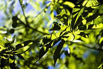 绿绿的树叶树枝