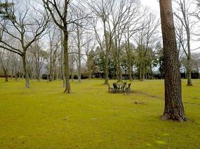 草坪大树蓝天