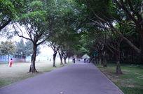 公园林间小道
