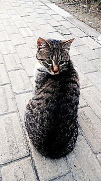 黑色小猫咪