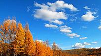 大兴安岭林区秋色