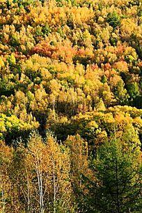 喇嘛山风景区森林秋色