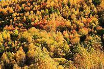 喇嘛山森林秋色
