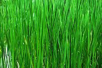 翠绿的草丛背景