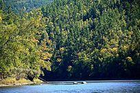 森林河茂密的树林