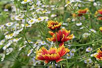 公园里盛开的成片的小野花
