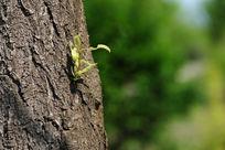 树干上的新芽