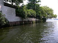 西湖白墙大树
