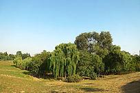 园林中的绿树