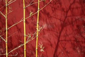 泰山岱庙红墙竹影