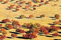 五角枫风景区秋景