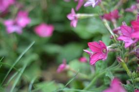 盛开紫色的小花