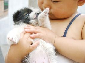被抱着的狗狗