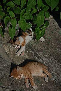 吵架的两只猫