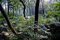 茂密的树林风光