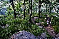 山中树林取水的行人