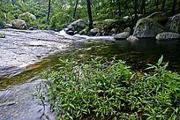 树林中的清澈溪流