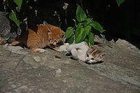提高警惕的两只猫