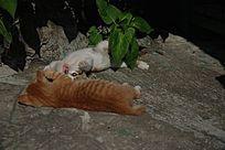 玩累了的两只猫