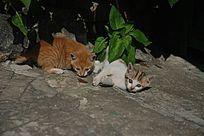 一致对外的两只猫