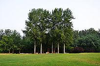草地旁的大树