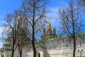圣母安息大教堂与植物树木