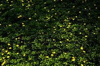 绿草地上的黄色小碎花