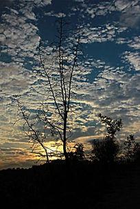 夕阳下的云天和小树枝