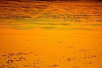 波光粼粼的金色湿地水面