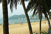 大东海沙滩椰子树