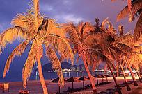 大东海沙滩椰子树夜景