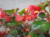 一片红色花朵