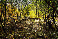 秋天五颜六色的色彩风光