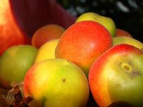 近距离拍的水果杏