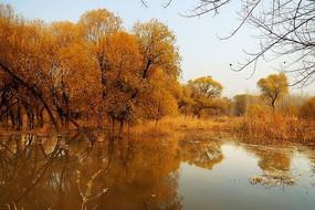 金色的柳树湾秋季美图