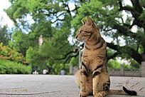 侧着头的猫猫