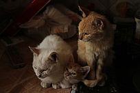 角落里的三只猫