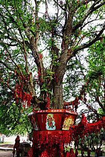 南山寺许愿树