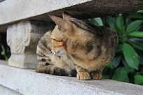 歪着头在看东西的猫猫