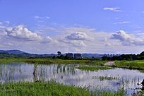 水塘周边的绿草