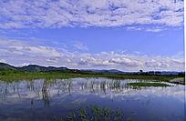 小湿地里的绿草