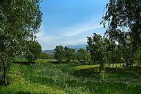 丰富的湿地公园绿色植被
