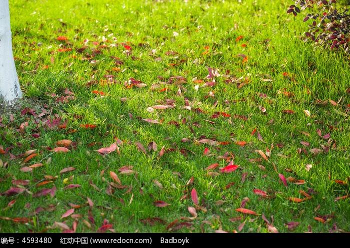 散落在草坪上的红叶图片