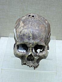 扎赉诺尔人头骨化石