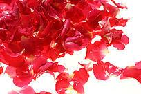 红色花瓣高清晰大图
