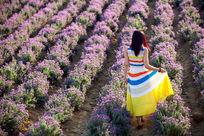 薰衣草园中穿裙子的少女