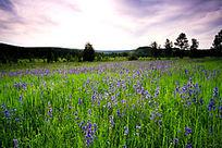 草原野花遍地开