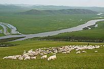 额尔古纳河草地牧羊